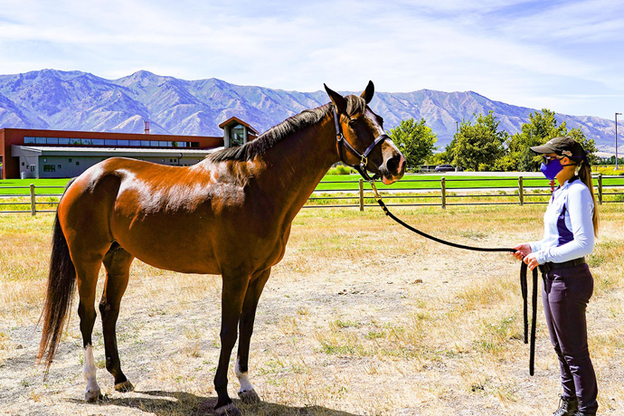 Former Show Horse Starts Second Career in Equine Assisted Therapy at USU