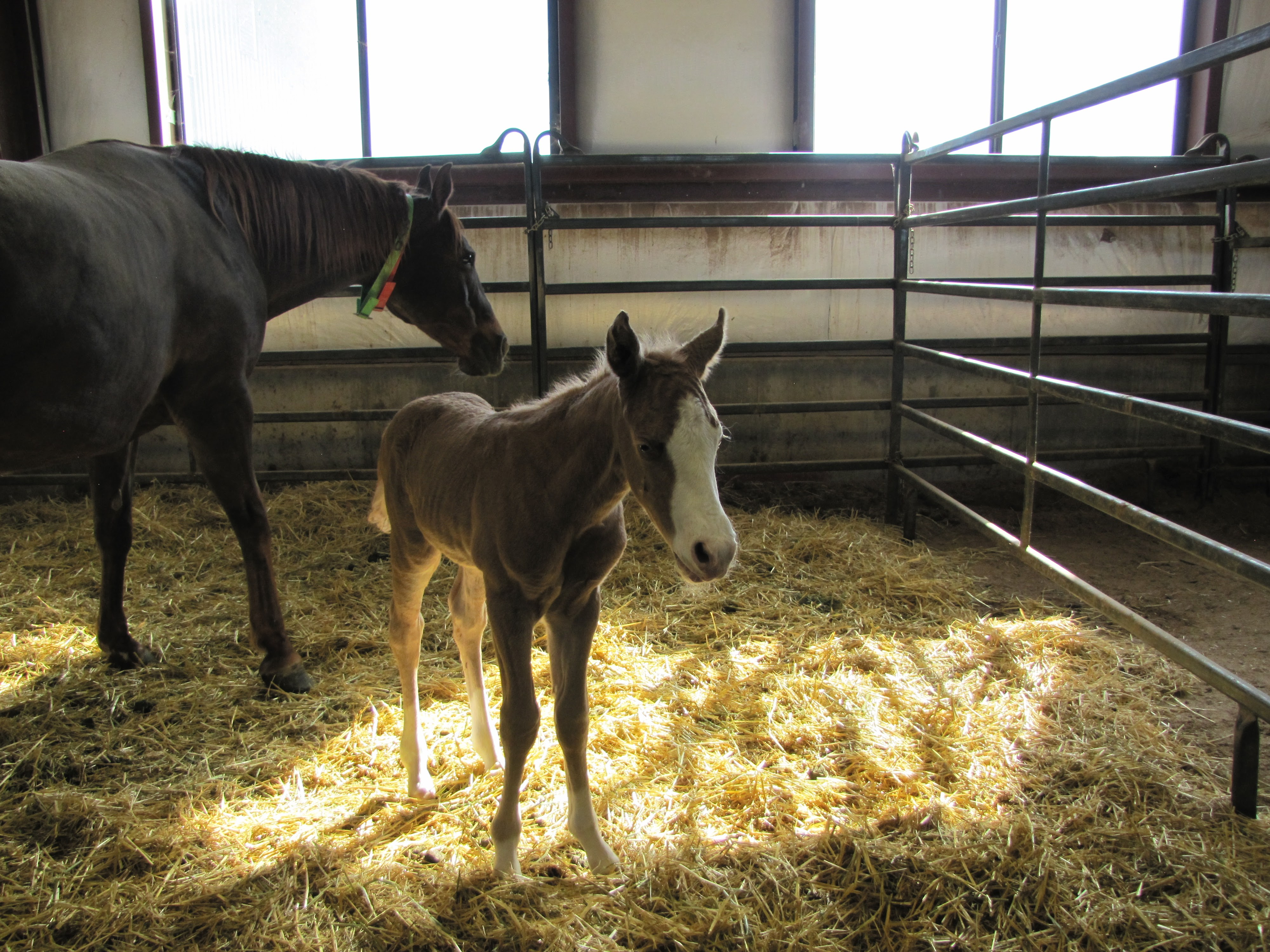Equine Center Foal Watch