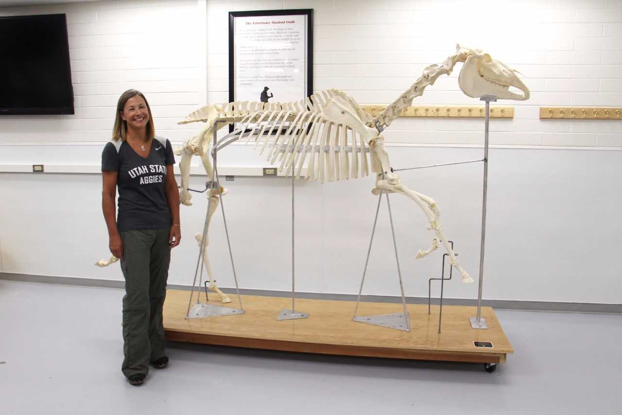 Fully Articulated Horse Skeleton is New Teaching Tool