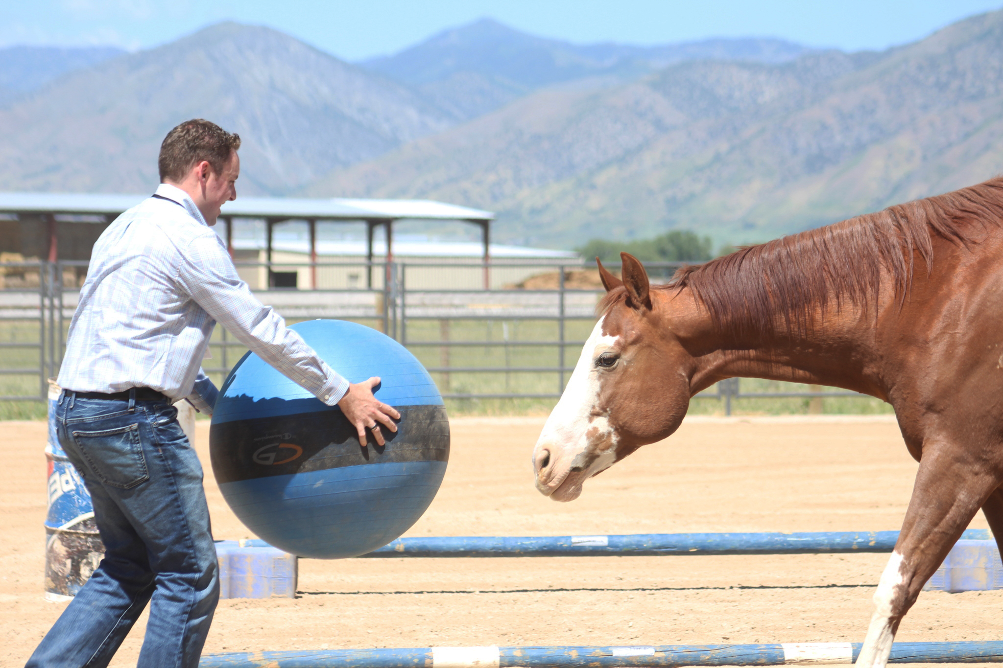 Horses Hone Questar Employees' Communication Skills