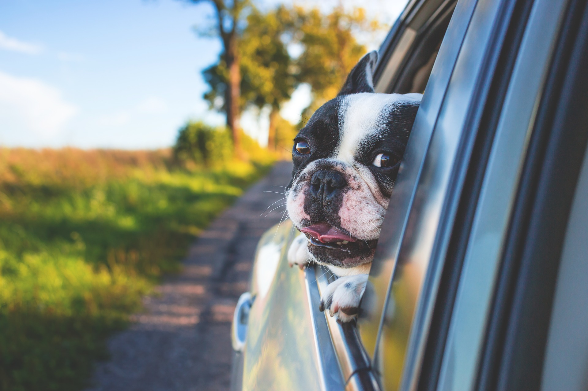 Pets and Travel: What to Know Before You Go
