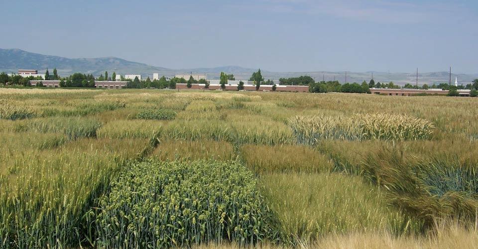 Land Plant